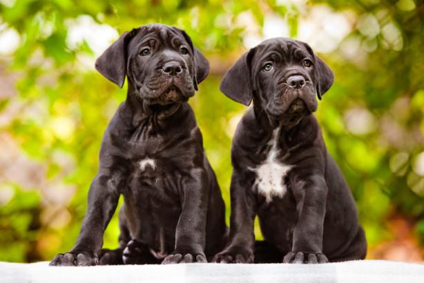 Varför ska man ha en hundförsäkring?