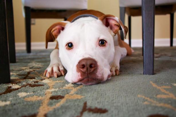 Hur får man en hund att sluta skälla?