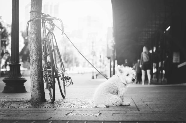 Bästa & sämsta hundarna för pälsdjursallergiker