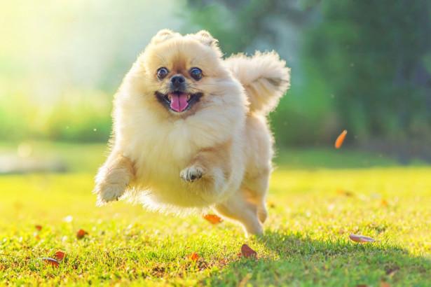 6 hundraser som är bäst som förstagångshundar