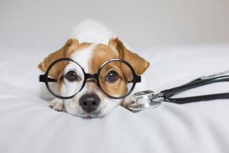 Har din hund fått diskbråck? Hitta orsak, symtom och behandling
