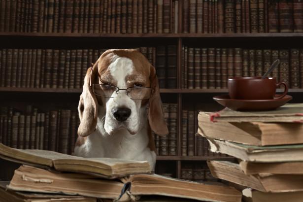 Hundförsäkring till en gammal hund